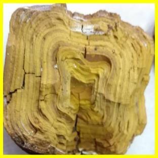 牛黄の断面:層紋が幾重にも重なっている